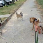 Rencontre tendue avec un chien sans son maître [vidéo]