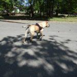 S'attaquer aux symptômes ou à la cause(en éducation canine) ?